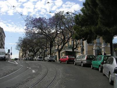 Lisbon Rua dom Pedro V Principe Real jacarandas