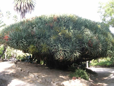 Lisbon Botanical garden