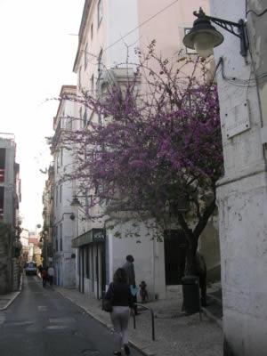 Lisbon Rua da Arco da Graca1