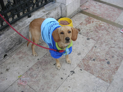Little dog church Rossio