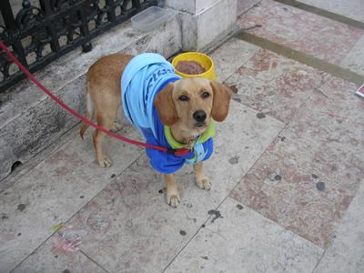 Little dog church Rossio