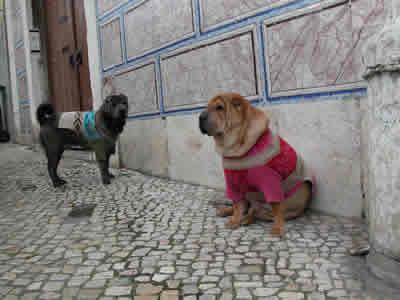 Dogs in wintertime at flea market Feira da Ladra home made dog dresses