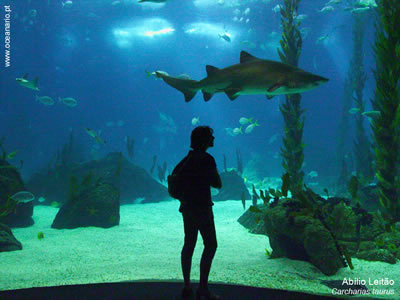 Lisbon Oceanarium a wonderful experience