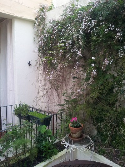 Mouraria 3 bedroom apartment Lisbon patio March 2016