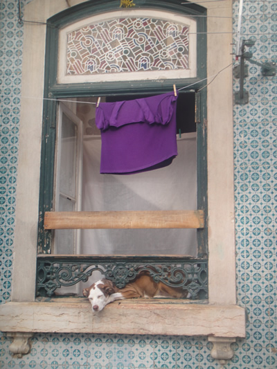 doggy in the window Alfama