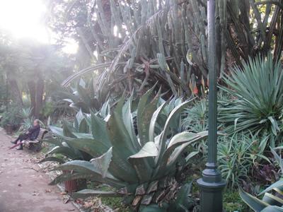 Estrela Garden exotical unique Lisbon 2