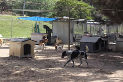 Bianca Association abandoned dogs Sesimbra Portugal dogs 2