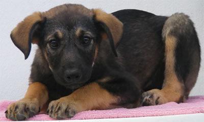 Bianca Association Sesimbra Portugal abandoned dogs Aphrodite02