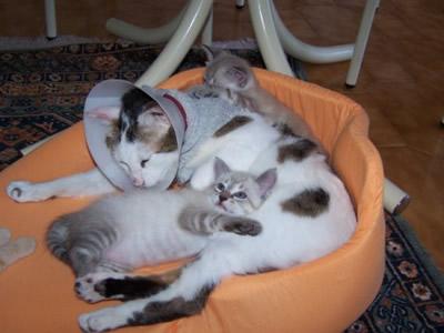 Bianca Association Sesimbra cats jeremias_linda_nelo_e_nino014