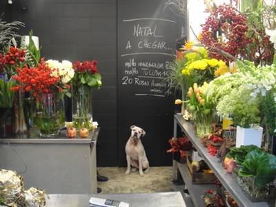 Famous Interior Designer on Dog Suki In The Flower Shop        Natal A Chegar         Christmas Is