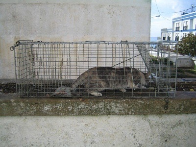 Bianca Ass. Sesimbra avoid overpopulation sterilization cats1