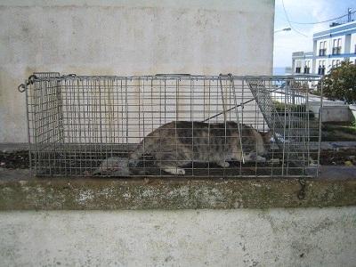 Bianca Ass. Sesimbra avoid overpopulation sterilization cats1