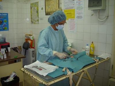 Bianca Ass. Sesimbra avoid overpopulation sterilization cats2